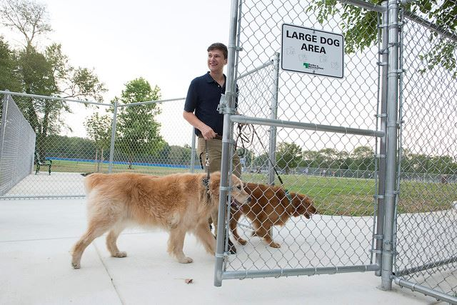 dog entering large dog area at riverdale dog park